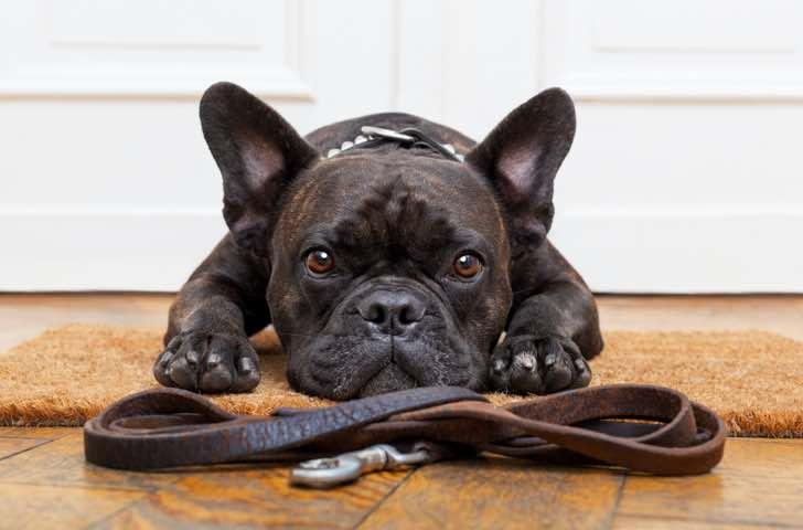 Promenade, transport et vêtements chien