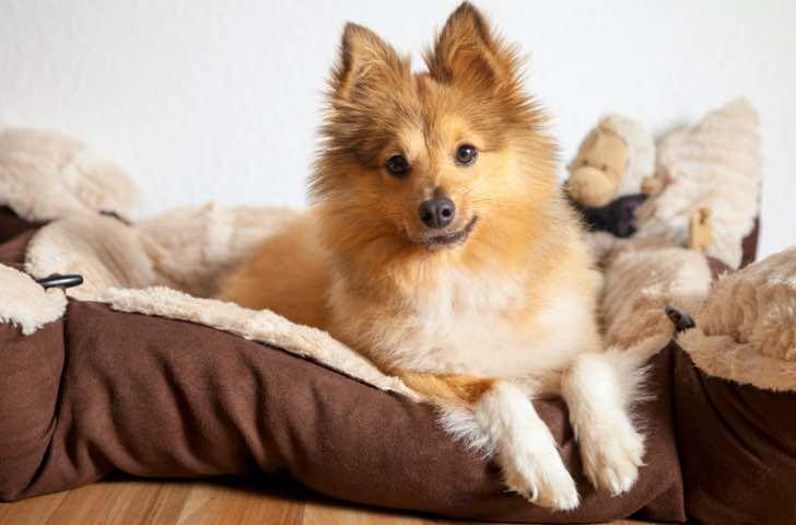 Paniers, coussins et tapis pour chien