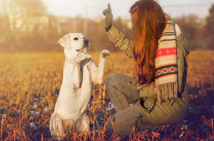 Matériel d'éducation chien