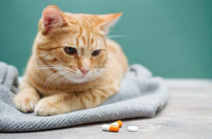 Compléments alimentaires chat