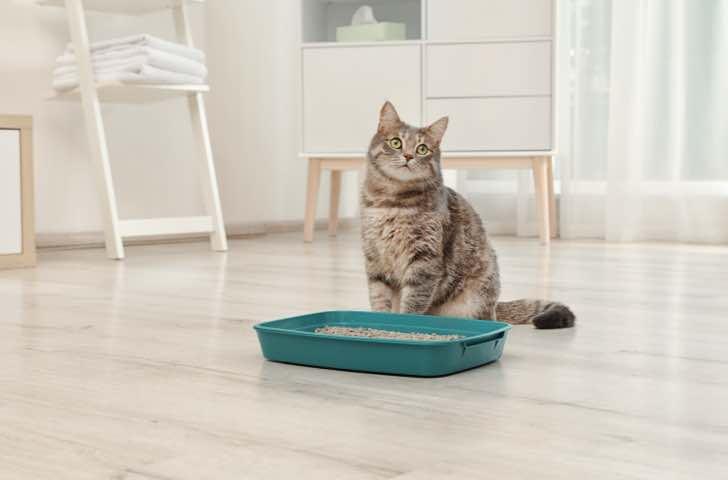 Litières et produits de propreté chat