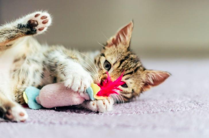 Jouets, peluches et balles pour chat