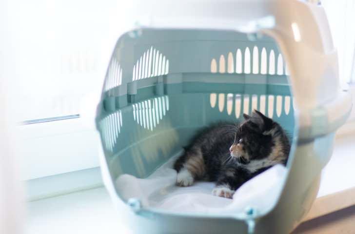Sacs et caisses de transport chat