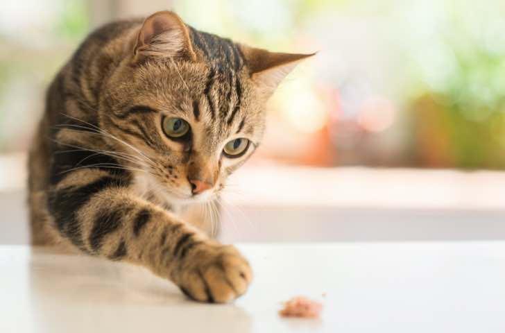 Repas et friandises chat