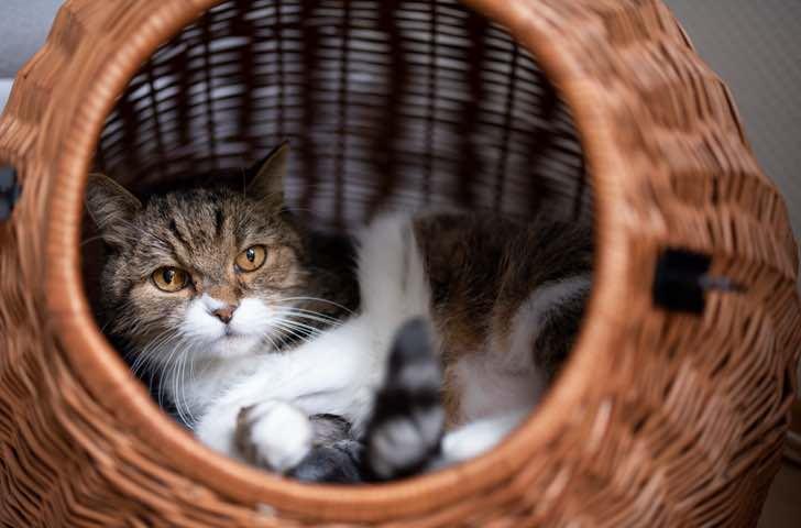 Paniers et coussins chat