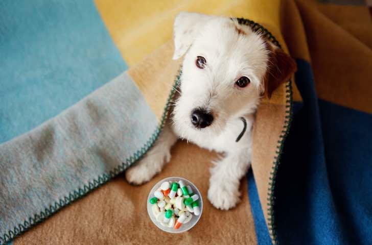 Compléments alimentaires chien