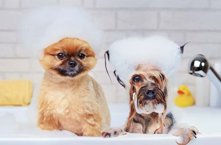 Produits de toilettage chien